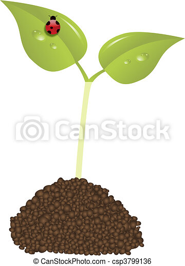 young plant  - csp3799136