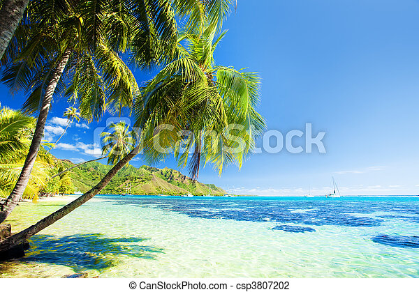 Palm tree hanging over stunning blue lagoon - csp3807202
