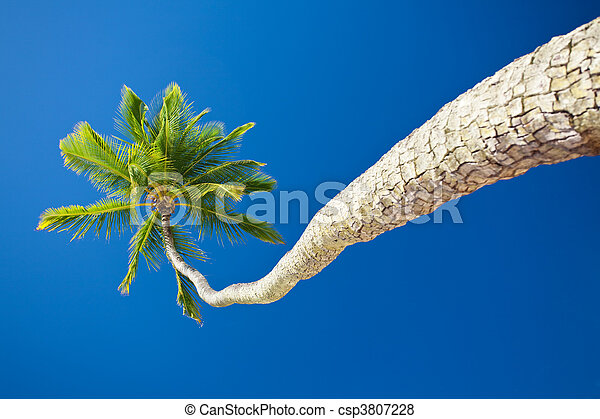Coconut palm against blue sky with copyspace - csp3807228