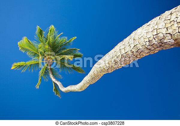 Coconut palm against blue sky with copyspace - csp3807228