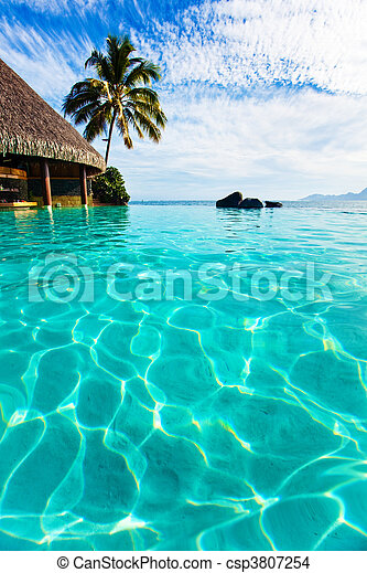 Palm tree hanging over infinity pool - csp3807254