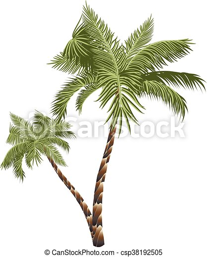 Two Palm Trees - csp38192505