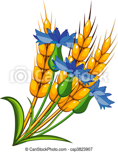 Wheat with cornflowers - csp3823907