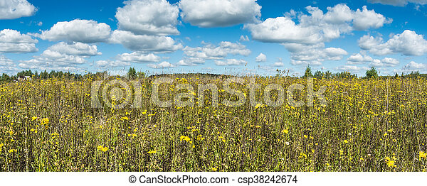 Summer natural agricultural field panoramic landscape: beautiful meadow with yellow wildflowers under summer blue sky with white clouds under bright summer sunlight near village panorama landscape