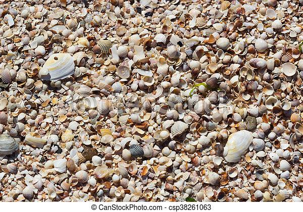Sea Shells Seashells - csp38261063