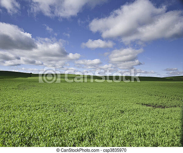 Flat field with clouds - csp3835970