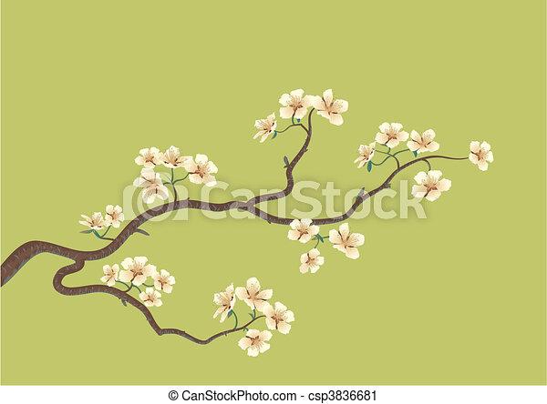 japanese cherry tree - csp3836681
