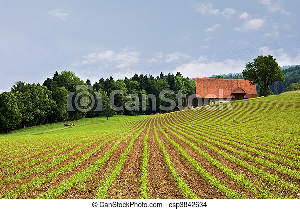 agriculture fields - csp3842634