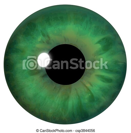 Green Eye Iris - csp3844056