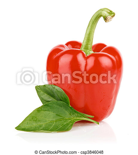 fresh single pepper fruit isolated - csp3846048