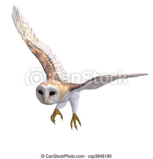 Owl Claws Drawing Barn Owl Bird