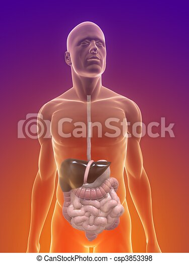 human digestive system - csp3853398