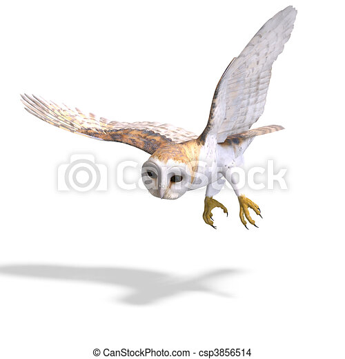 Barn Owl Bird. 3D rendering with  and shadow over white - csp3856514