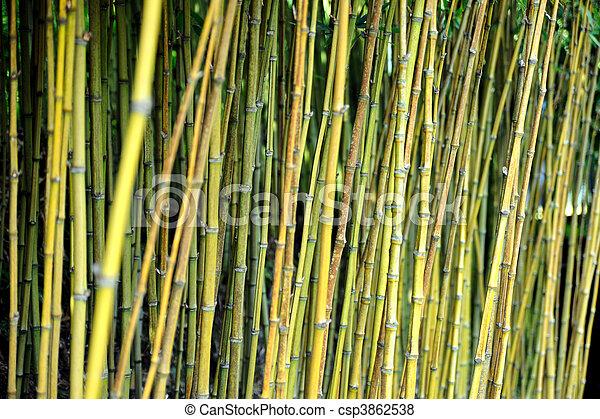Bamboo jungle - Monte Palace botanical garden, Monte, Madeira - csp3862538