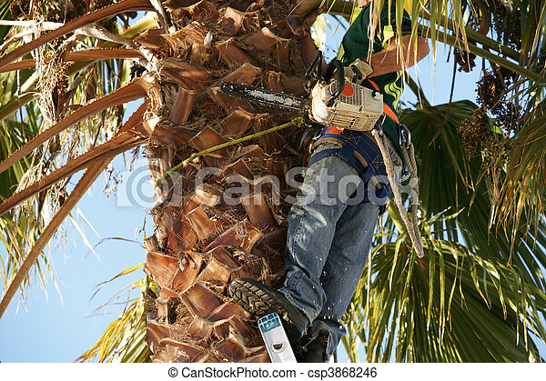Safety gear, for tree trimmer. - csp3868246