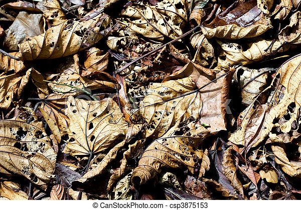 Background of fallen leaves decaying on the forest floor  - csp3875153