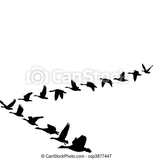 Geese flying in the shape of unit - csp3877447