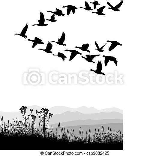Migrating geese in the autumn - csp3882425