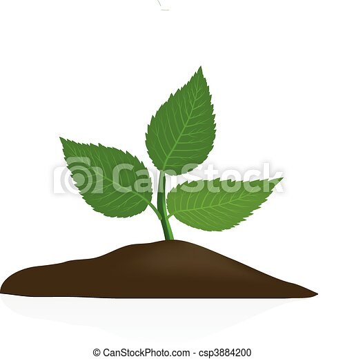 Young plant in dark soil isolated - csp3884200