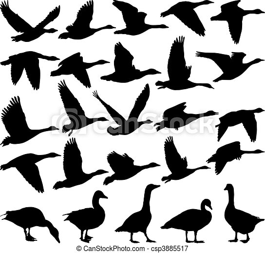 Geese black silhouette - csp3885517