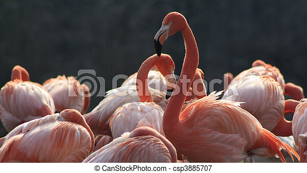 Stock Photo - Animal