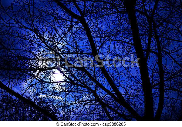 Bare tree - csp3886205