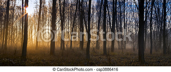 Misty forest - csp3886416