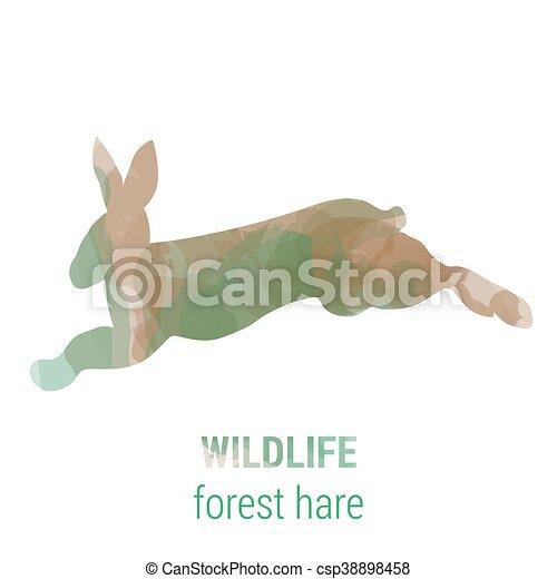 Wildlife banner - forest animals - hare - csp38898458
