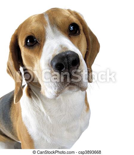 Adult dog - csp3893668