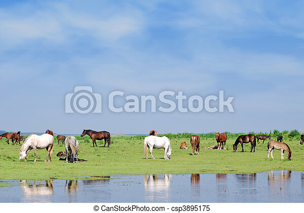 horses on watering place - csp3895175