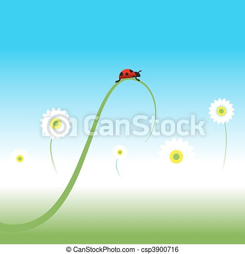Ladybug, spring background - csp3900716