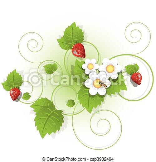 strawberry - csp3902494