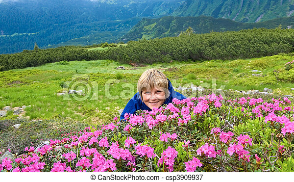 Mountain rhododendron blossoming - csp3909937