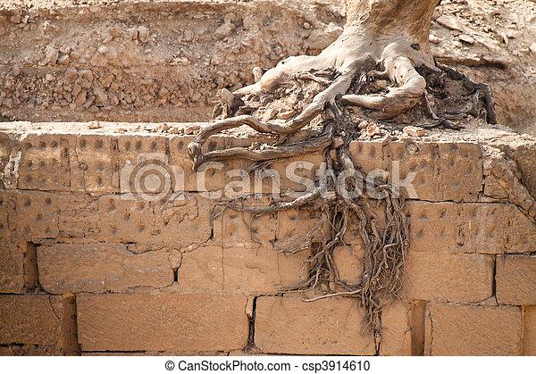 Tree roots - csp3914610