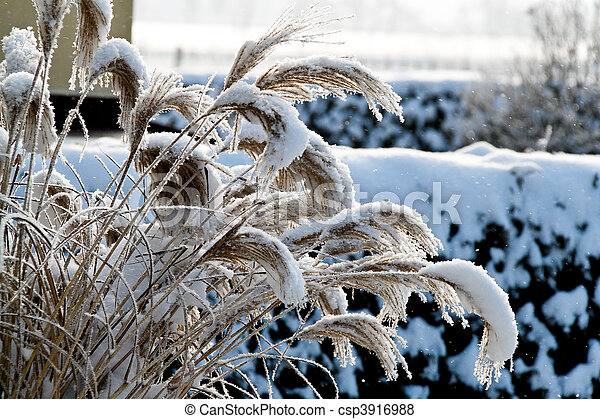 Landscape with hoarfrost, frost and snow on tree in winter. - csp3916988
