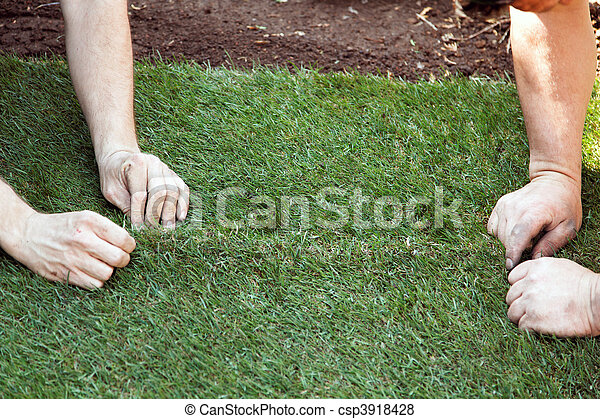 Turf is laid by gardener - csp3918428