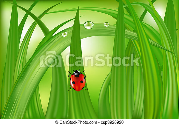 Ladybug On Green Grass - csp3928920