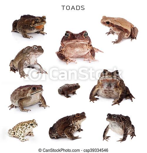 Toads set on white - csp39334546