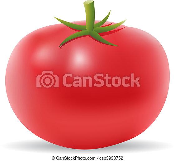 Tomato - csp3933752