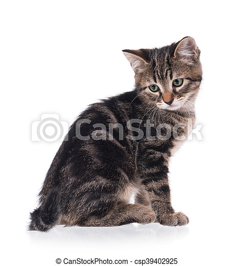 Stock Photo - Cute little kitten - stock image, images, royalty free ...: www.canstockphoto.com/cute-little-kitten-39402925.html