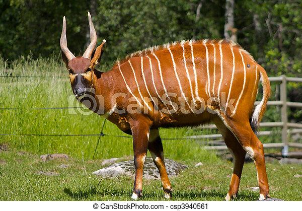 Antilope Eye Contact - csp3940561