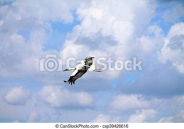 wild birds - csp39426616