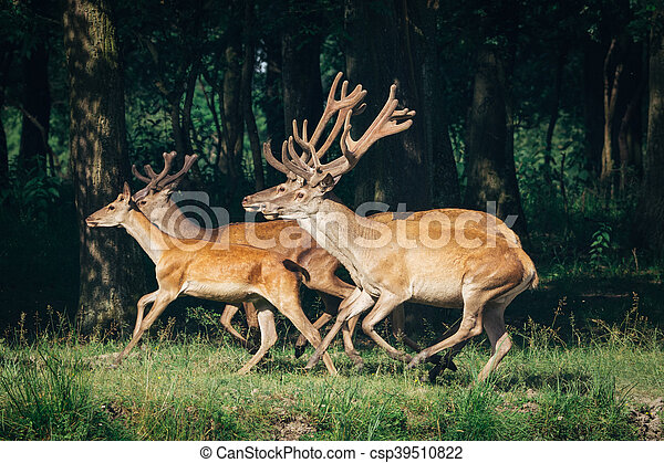 a herd of red deer in a forest - csp39510822