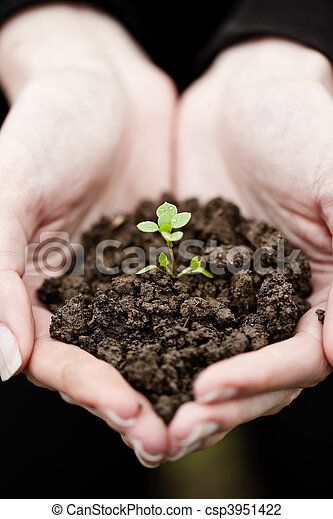 Hand holding a fresh young plant. Symbol of new life and environmental conservation. - csp3951422