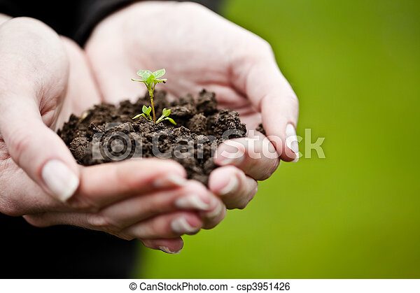 Hand holding a fresh young plant. Symbol of new life and environmental conservation. - csp3951426
