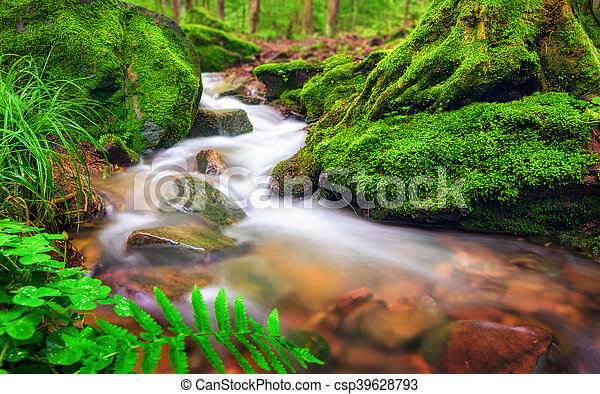 Forest brook in moss-covered environment