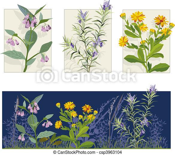 Herbs - csp3963104