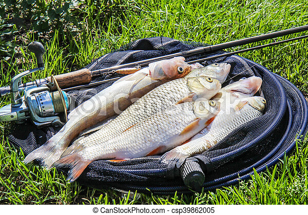 Stock photography of fishing catch on the grass and for How to get free fishing gear