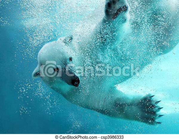 Polar bear underwater attack - csp3986333
