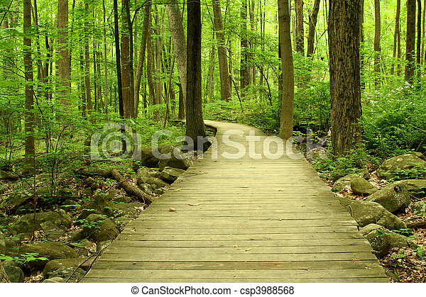 Wooden bridge in the woods - csp3988568